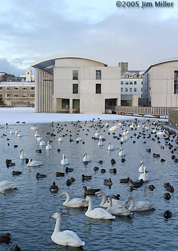 Tjörnin, Swans, and City Hall © 2005 Jim Miller - Canon 10D, Canon EF 35mm f2.8